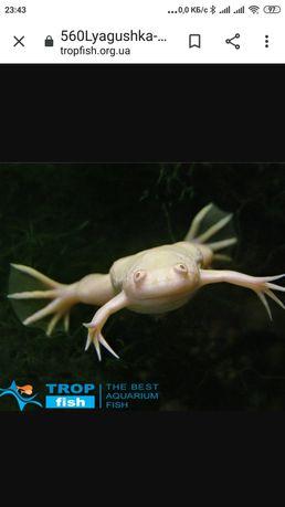 Продам лягушку желтую