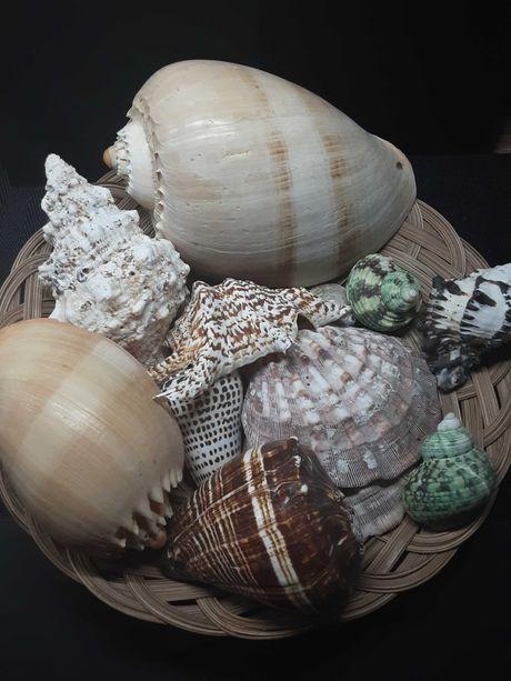 Muszle morskie roznokolorowe