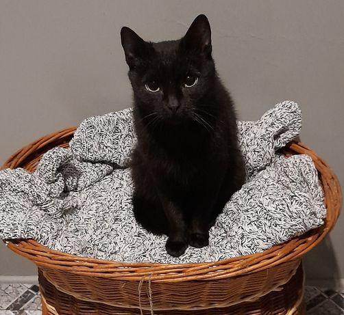 Nefri malutka roczna kotka szuka domku