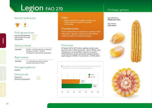 Nasiona kukurydzy Legion kiszonka ziarno biogaz kukurydza średniopóźna