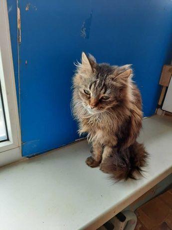 Самые милые кошки и коты в добрые руки (стерелизованы, кастрированы)