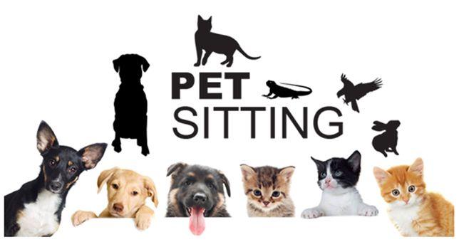 Pet Sitting Santarém