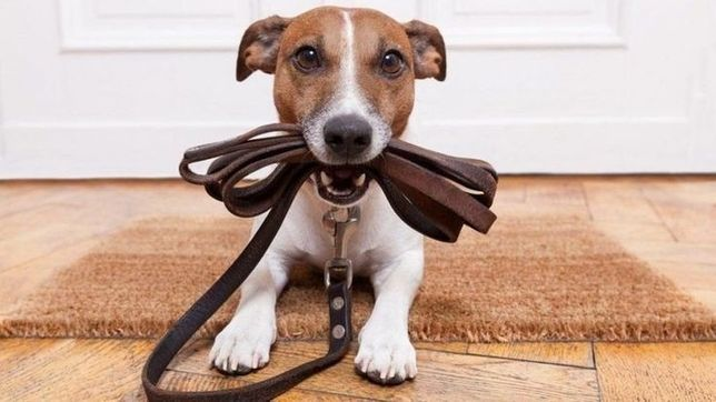 Выгул собак в Полтаве