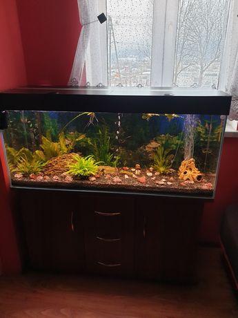 Akwarium 240 liter