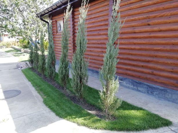 Рулонный газон, укладка рулонного газона
