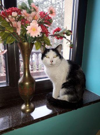 Zaginął kot ( kocurek ) Myszków dzielnica Światowit.