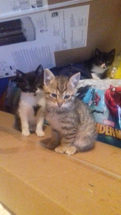 Oddam śliczne kocięta Mętów - image 1