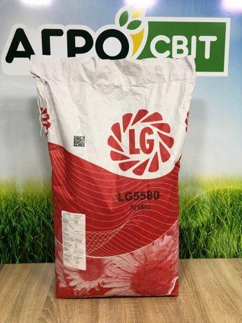 """Семена подсолнечника соняшника Лимагрейн """"ЛГ 5580"""" (Limagrain LG 5580)"""