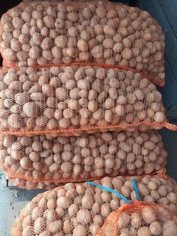 Ziemniaki paszowe odpadowe dowóz transport