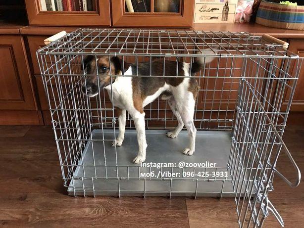 Усиленная клетка, переноска, вольер для собак №4, 75х50х52h см поддон