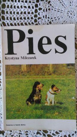 Pies. Krystyna Milczarek