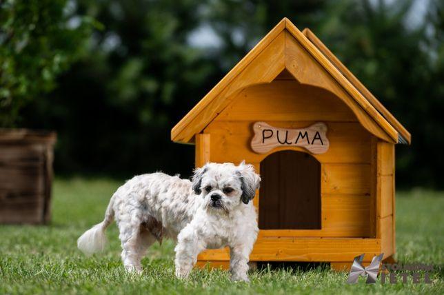 Mała buda dla psa WYSYŁKA CAŁA POLSKA