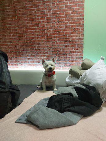 Psi fryzjer czapury