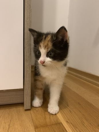 oddam kotke w dobre ręce
