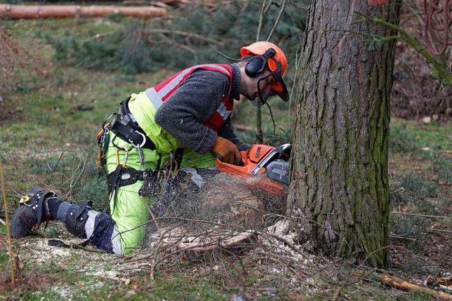 Wycinka, podcinka drzew, karczowanie działek. BĘDZIN