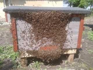 odkłady pszczele -ramka dadant i wlkp