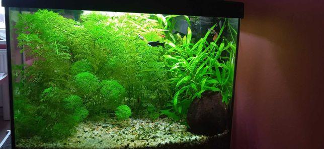 Akwarium 25L z wyposażeniem, rybami i krewetkami