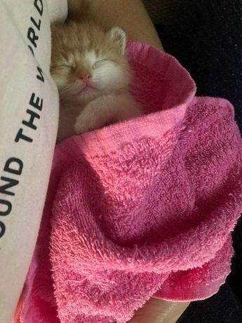 Свіжоспечений рижий кіт
