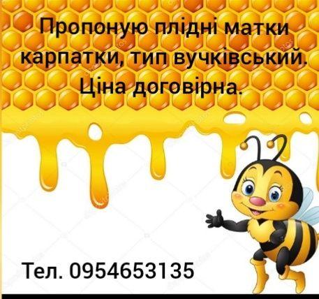 Пчеломатки Карпатка 2021р.Плідні мічені