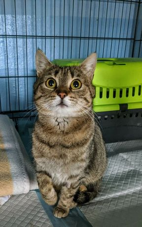 Malina kotka bura burasek miziak szuka swojego domu człowieka