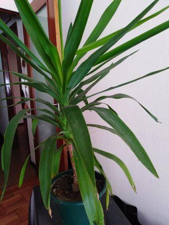 Planta em bom crescimento da se no interior