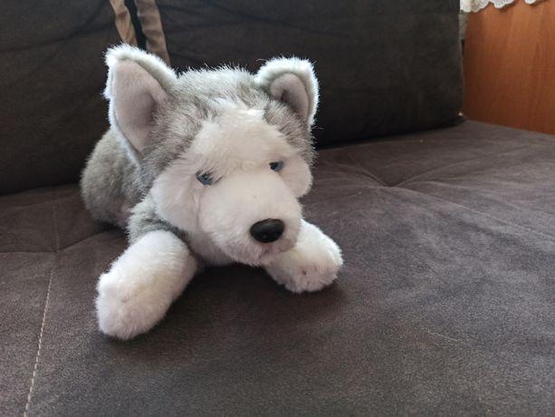Pluszak husky