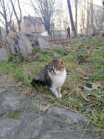 Стерилизованая котенька ищет семью