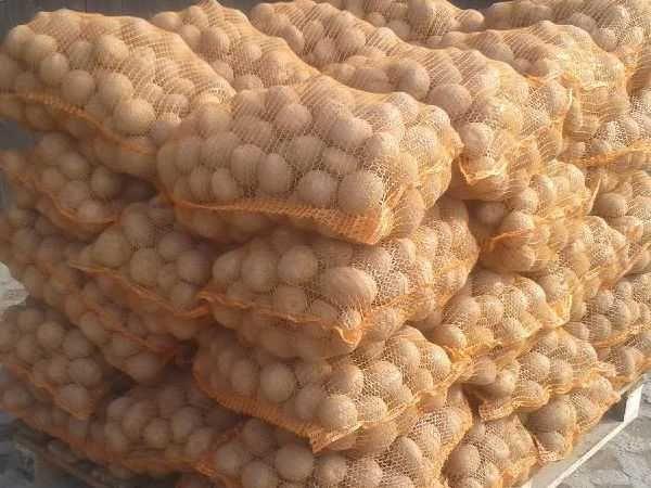 Ziemniaki jadalne wineta belarosa