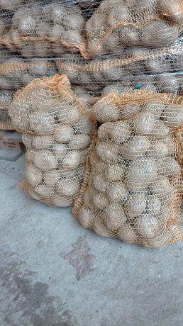 Ziemniaki od Producenta Gala, Vineta, Bellarosa i inne. Transport