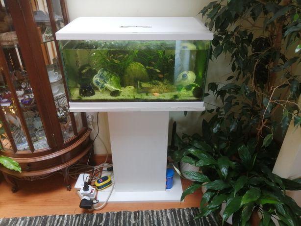 Vendo aquário 30 litros + peixes + plantas