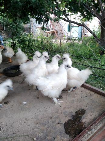 Цыплята пуховые