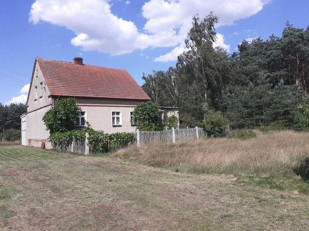 Dom pod lasem na sprzedaż - Duża działka