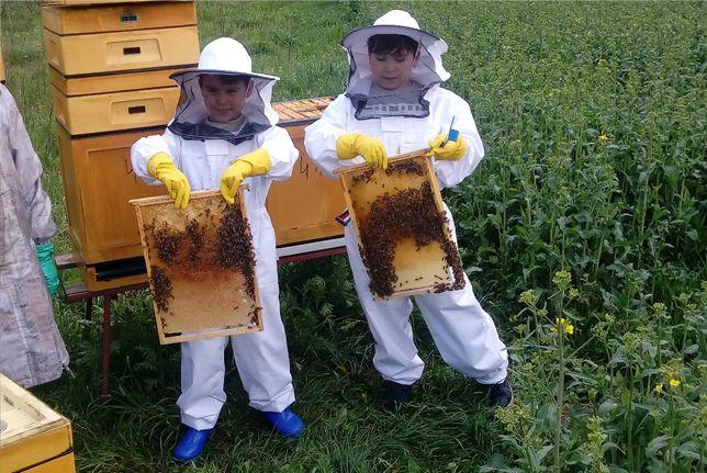 rodziny pszczele odkłady pszczoły z ulami na ramce dadant war posz