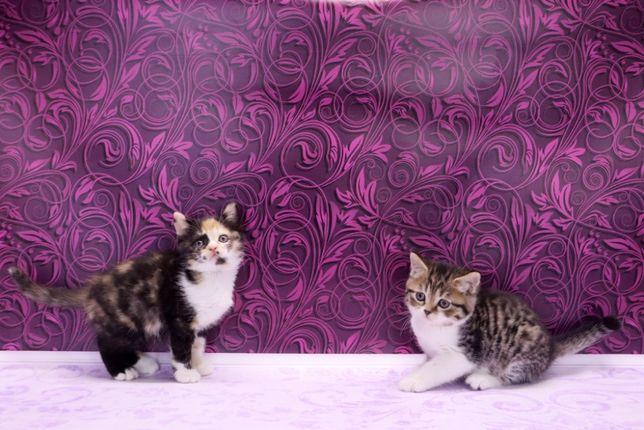 Нежные и красивые котята