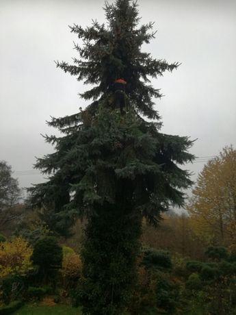 Wycinka i przycinka drzew metodą ALPINISTYCZNIE