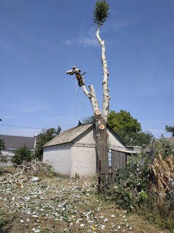 СПИЛ деревьев АЛЬПИНИСТами . Арборист, высотник. Дробилка веток.