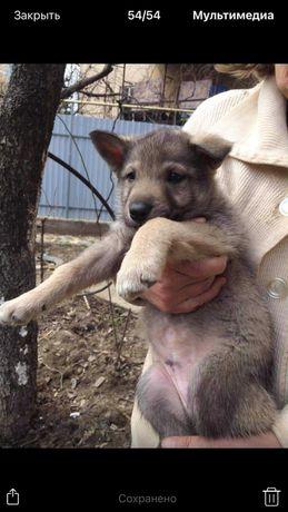 Терміново щенята шукають родину, Ужгород