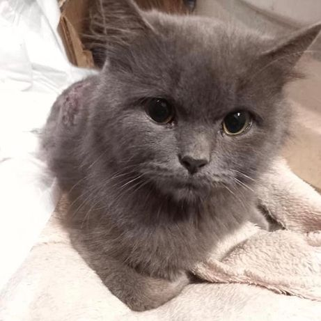 Кто потерял котика? Лелековка ул.Минская