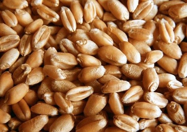 Овес пшениця ячмінь