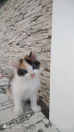 Котята полтора месяца