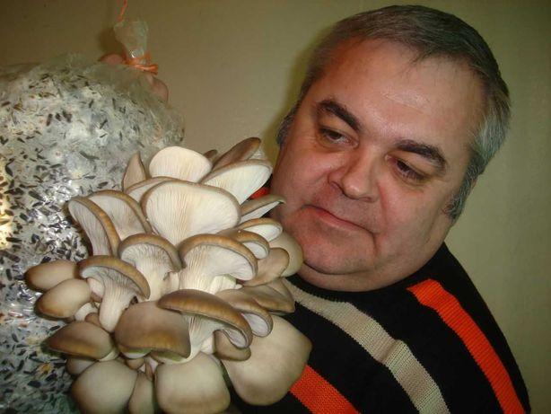 Набор для выращивания грибов на дому с  инструкцией.  Грибоводство.