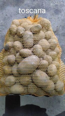 Ziemniaki jadalne żółte. Odmiany gala, toscana, belmonda