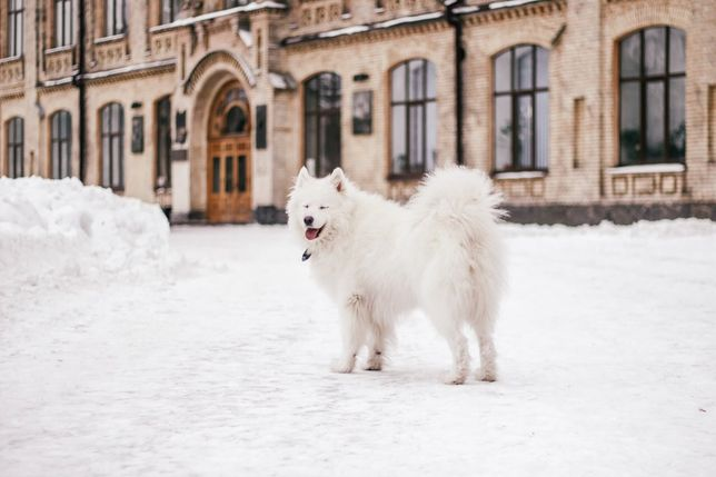 Собачка для Вашей зимней фотосессии, Киев,парки Политеха,Орлятко