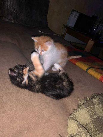 Котики домашние в хорошие руки