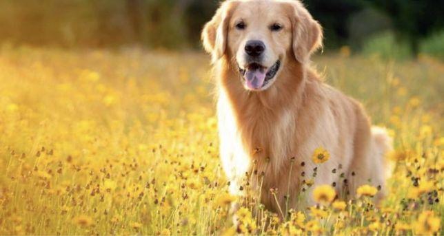 Выгул собак средних и маленьких ДВРЗ