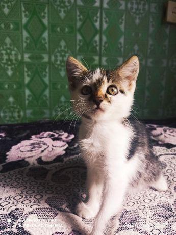 #кот #котэ #котик #котики #котенок #котейка #котята #котейка