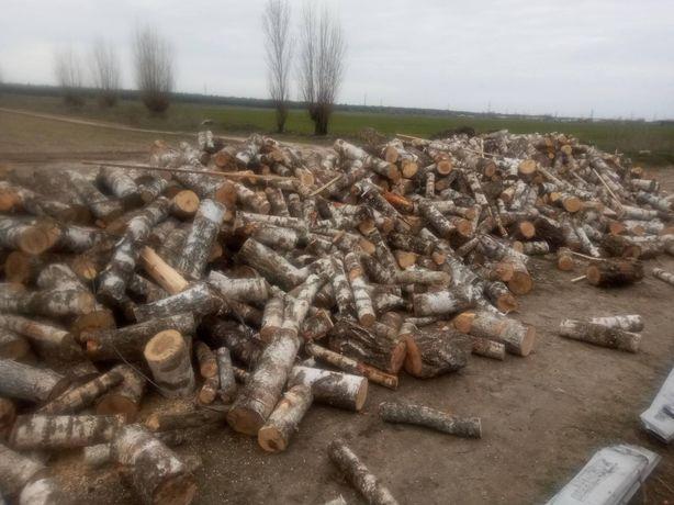 Дрова березы 1000 грн