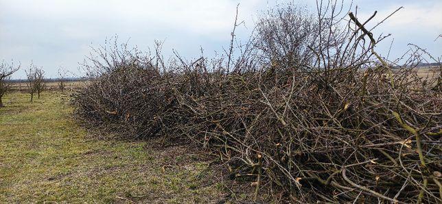 Oddam drewno - gałęzie po przycince sadowniczej