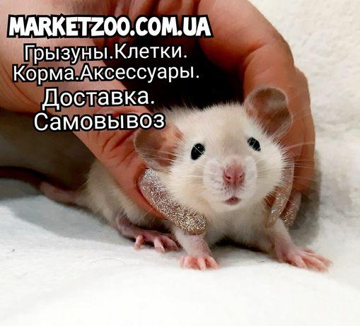 Крыски дамбо и клетки,крысы,крысята,крысятки