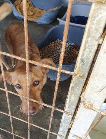 Mondego- cachorro de porte pequeno para adoção